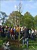 Baum des Jahres 2009_2